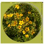 Pachi-ochibolec-150x150